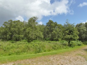 Plot at Drumlang, Gruline, Isle of Mull, PA71 6HR